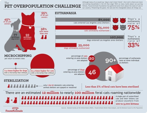Pet Overpopulation Challenge infographic